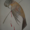 Thumbnail image for Thorn Birds of the World