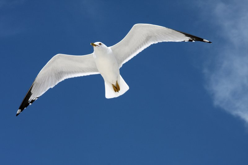 Jonathan Livingston Seagull by olearysfunphotos Perfection is.....Being There and Showing Up