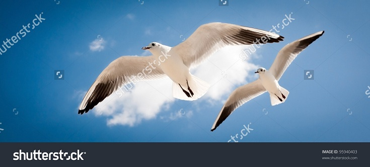 two seagulls are flying against the blue sky Images that Create and Energise New Neural Paths